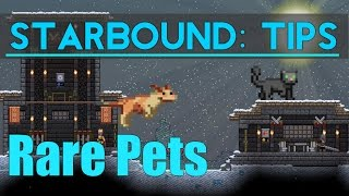 What's up guys! Super short video today covering the rare dog and cat pets and where to find them. Smack that Like button if you...