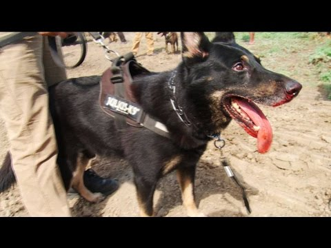 DAPL Guards Attacked Water Protectors with Dogs & Pepper Spray