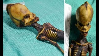 """תעלומת המומייה נפתרה: חוקרים קבעו למי שייכות עצמות ה""""חייזר"""""""