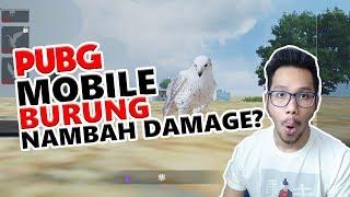 BURUNG NAMBAH DAMAGE ? - PUBG MOBILE INDONESIA