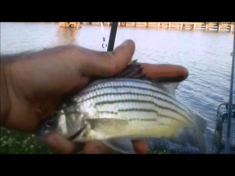Fishing with Grass Shrimp, Mississippi River