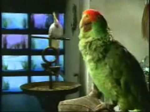 "Funny Commercials   Budweiser ""Budbirdswazzup"" ads"