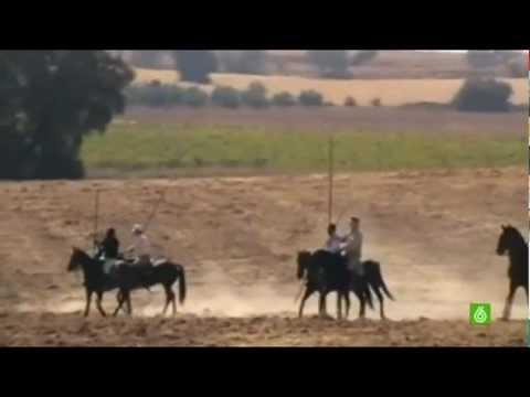 Wildschweinjagd in Spanien blüht wieder