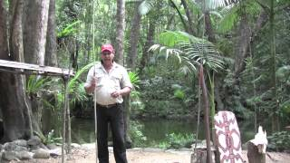 Daintree Australia  City pictures : Secrets of the Daintree Rainforest Queensland Australia with Aboriginal Guide