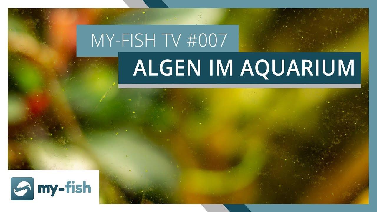 my-fish TV - Deine Nr. 1 Anlaufstelle für alle Themen rund um die Aquaristik 57