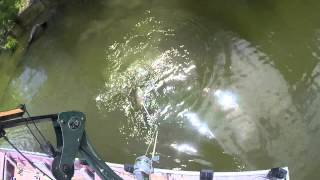 Eufaula (OK) United States  City pictures : Bowfishing on Lake Eufaula, Oklahoma