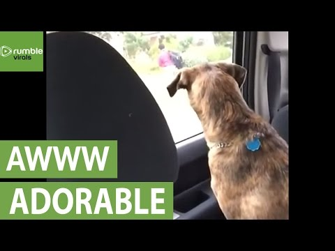What Might Your Dog Not Like You Doing?
