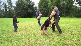 Training Dogs To Protect Kids From Bad People