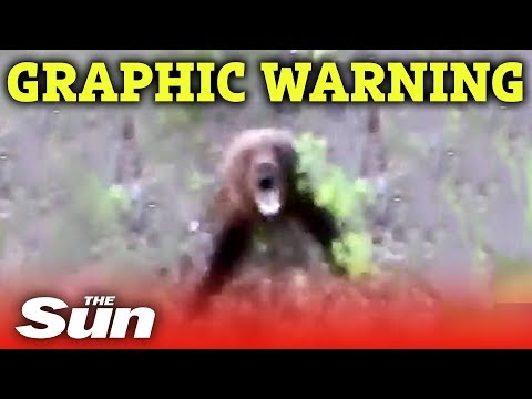 Man kicks bear, quickly regrets his decision