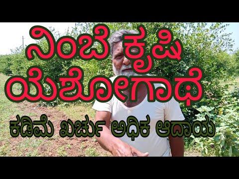 ನಿಂಬೆ ಕೃಷಿ ಕಡಿಮೆ ಖರ್ಚು ಇ-ಲಕ್ಷ ಆದಾಯ lemon cultivationkannada#nimbekrushi kannada#nimbe hannu#