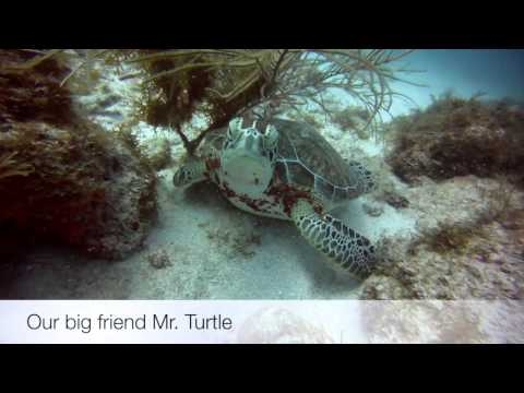 Scubadiving on Aruba - the highlights