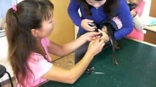 愛犬の美容教室開催です