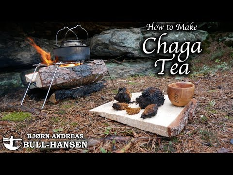 How To Make Chaga Tea | The Cancer Fighting Fungus | Bjørn Andreas Bull-hansen