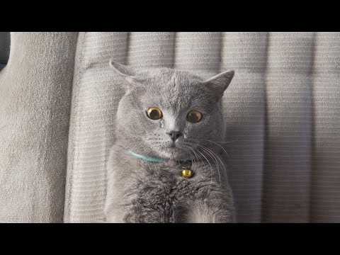 Aaron s Animals The Ultimate Viral Cat Video