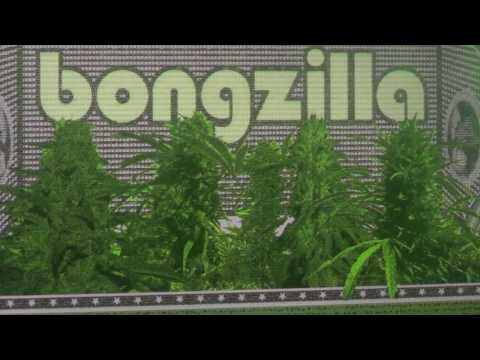 Bongzilla live @roadburnfest / @013 [video] #Roadburn #RB17