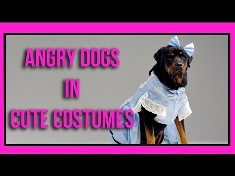Costumes - Subscribe for more videos! ▻ http://bit.ly/SubHelloDenizen Like us on Facebook - http://fb.com/HelloDenizen Follow us on Twitter - http://twitter.com/HelloDenizen Check out our previous...