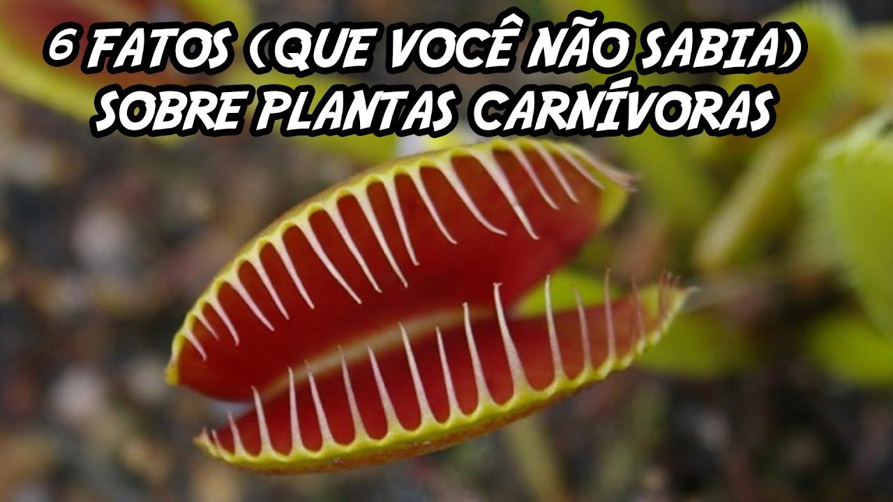 6 fatos que você não sabia sobre plantas carnívoras