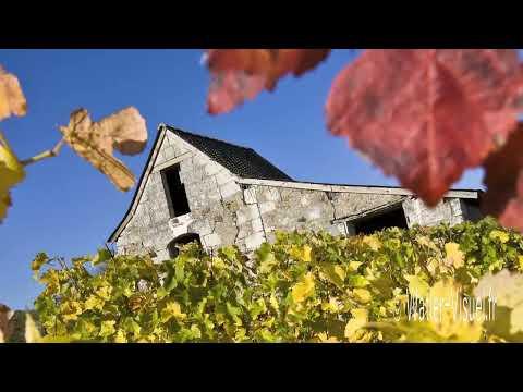 Diaporama sur le thème de la Vigne au Vin