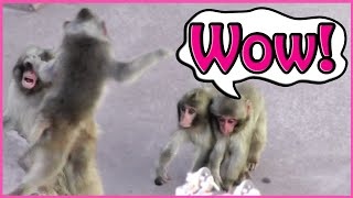 Battle Of Four Little Monkey:Funny Animals