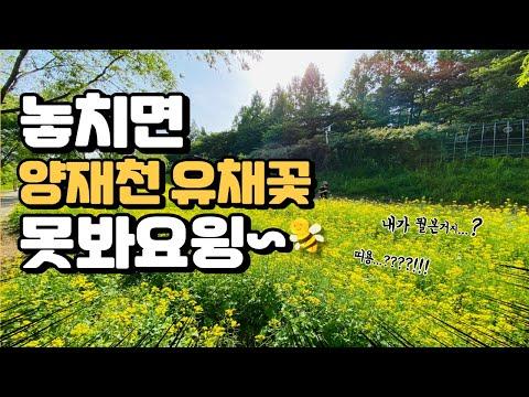 [4K] 워킹 서초 6편_서초도 B대면데이트~ 양재천 유채꽃 풍경! 놓치면 못봐요윙~👀🐝 feat. 오리