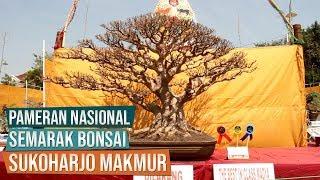 Video Bonsai Berpredikat Baik Sekali Dalam Pameran Nasional Semarak Bonsai Sukoharjo Makmur 2019 MP3, 3GP, MP4, WEBM, AVI, FLV Juni 2019