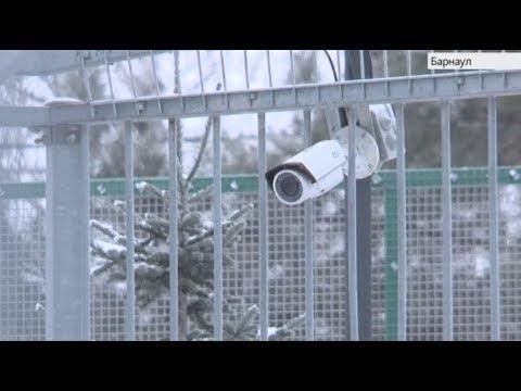 Телеканал «Катунь 24» установил веб-камеры в вольерах леопарда африканских львов и амурских тигров