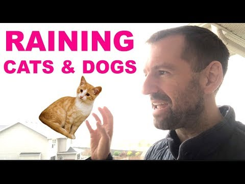 English Expression | Raining Cats And Dogs