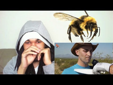 3000 BEES ATTACK MY FACE! | BLIND REACTION