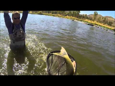 WildGuys – Catching a 9,5 lbs Largemouth Yellowfish on the Vaal River