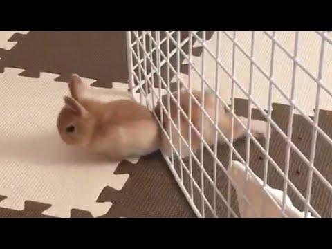 Ζώα εξπέρ στις αποδράσεις