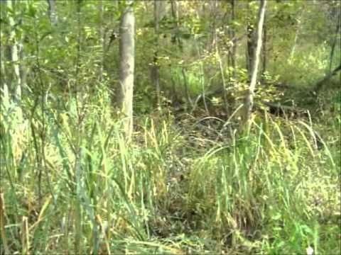 Hunter Gatherer Hike And Ramble – Part Three