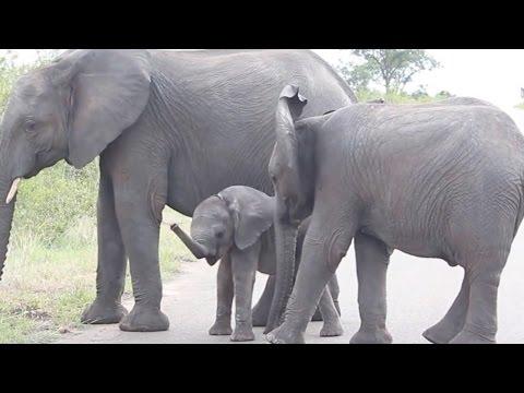 Cute Elephant Discovers Trunk