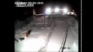 kurda av olan ev köpeği vahşi yaşam rusya yanki24.com