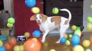 100 мячиков в подарок собаке на день рождения