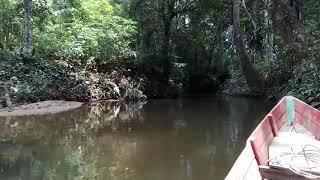 Nonton Susur sungai di pedalaman hutan dayak, Lamandau Kalimantan Tengah #orangutandays Film Subtitle Indonesia Streaming Movie Download