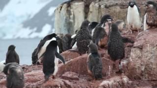 Filmed in January 2015 in Antarctica