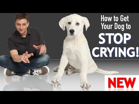 How To Get Your Puppy To Stop Crying And Whining!