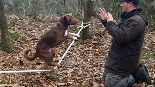 Amazing Acrobatic Dog