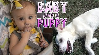 Daughter's 1st B'Day | Abandoned Puppy Update