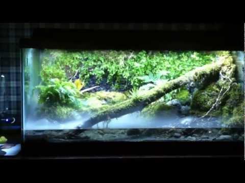 Vivarium frog tank. View at your own risk._Terrárium, Vivárium. Legeslegjobbak
