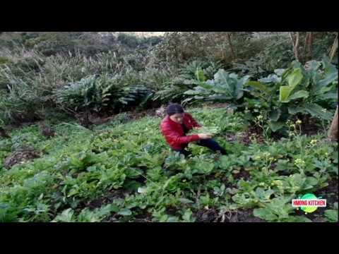 Nkauj Hmoob Vietnam Ua Zaub Pos Ntsev (видео)