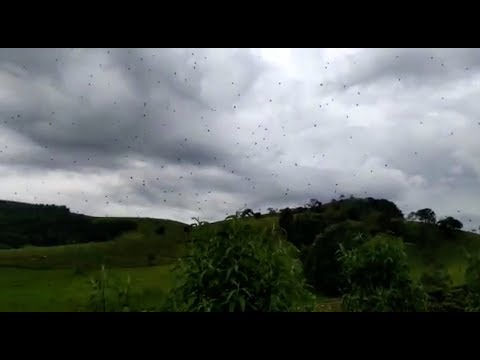 Brasilien: Hunderte Spinnen schweben scheinbar durch die Luft