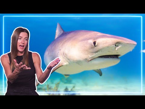 Tigers Sharks Encounter, Worst injuries.. How to become a SURVIVALIST | Experts Talk
