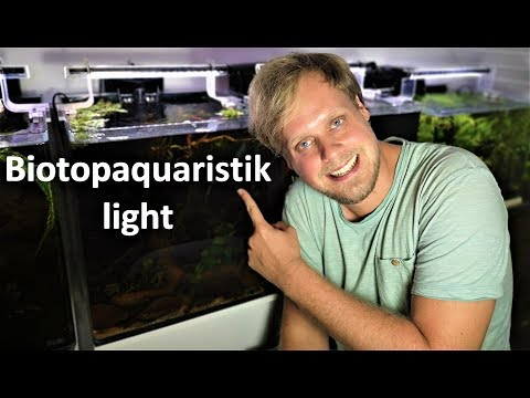 Biotop-Aquaristik Light - Neueinrichtung eines Aquariums für Apistogramma agassizii