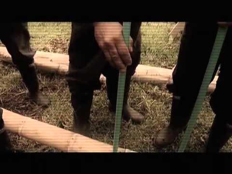 guadua - Colombia tiene 40 mil hectáreas sembradas de guadua, fibra vegetal que se emplea actualmente en la construcción por su gran versatilidad. Así lo hacemos Cap ...