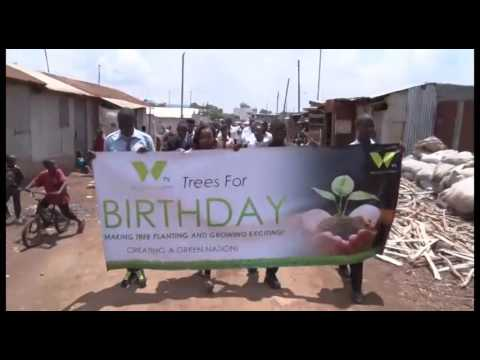 Trees For Birthday PROMO July 15TH 2016