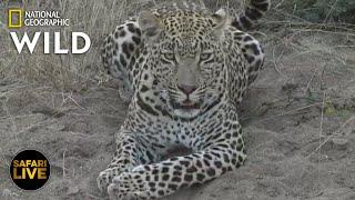 Safari Live - Day 371 | Nat Geo Wild by Nat Geo WILD