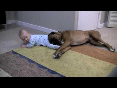 Ez a kutya igazán szereti ezt a kisbabát