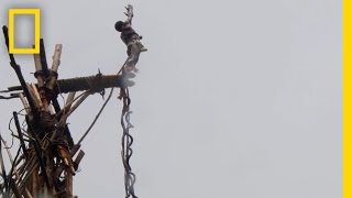 The Original Bungee Jump Is Pure Crazy!