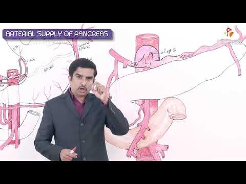 Arterial supply of pancreas made simple - Gross anatomy of Abdomen